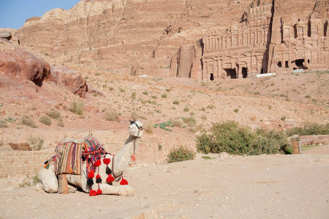 Kamel vor den Königsgräbern im jordanischen Petra