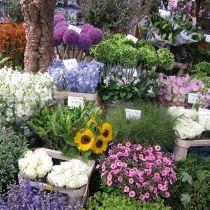 Sonnenblumen, Rosen, Rittersporn, Zierlauch, Hortensien und weitere Blumen am Blumenmarkt in Amsterdam