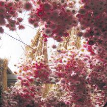 Hängende getrocknete rosa Blumen in Sträußen