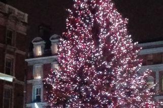 Glitzernder Weihnachtsbaum vor Covent Garden/London